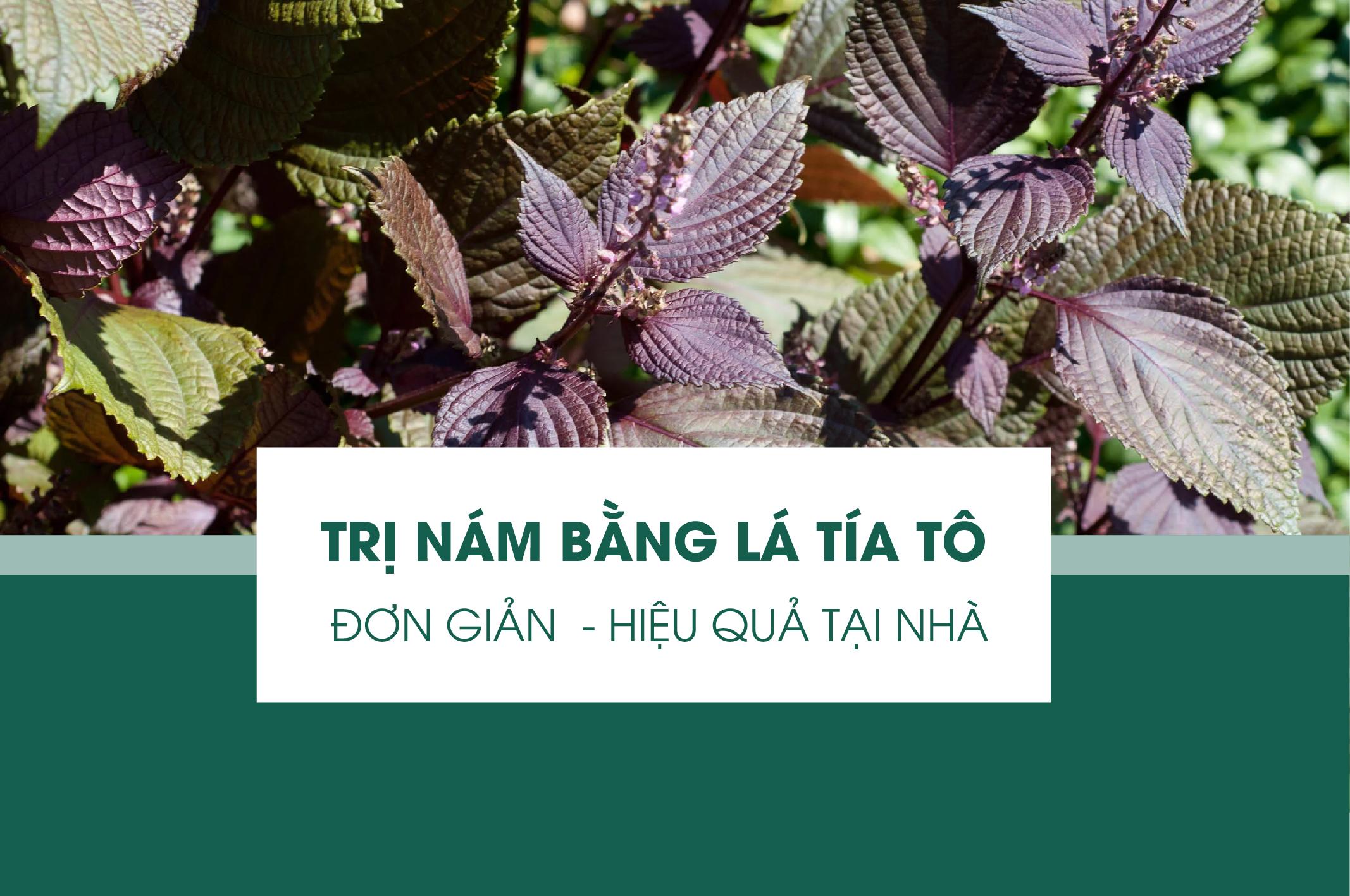 tri-nam-bang-la-tia-to