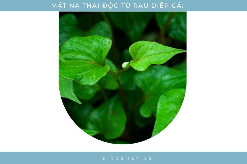 mat-na-thai-doc-da-tu-rau-diep-ca