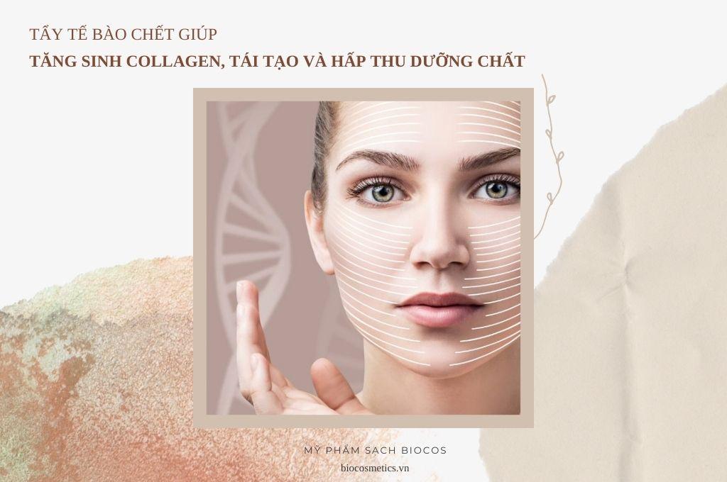 tay-te-bao-chet-giup-tang-sinh-collagen-tai-tao-va-hap-thu-duong-chat